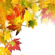 Tickets & Infos von 1. FC Saarbrücken-Tischtennis