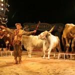Circus Probst - Leidenschaft