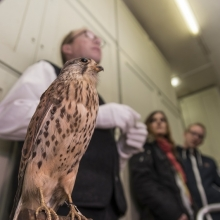 Chefvisite im Vogelkundemuseum