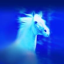 Eurocheval - Europamesse des Pferdes