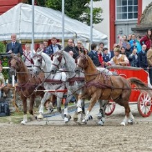 Hengstparade 2015 - Landgestüt Dillenburg
