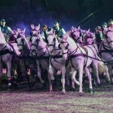 Im Takt der Pferde