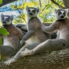 Klaus Fleischmann: Madagaskar