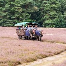 Ausflugsfahrt mit dem Planwagen durch die Heide zum Mittagessen
